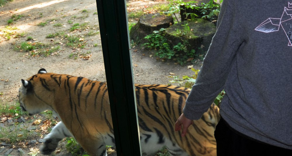 Zoo NMO jumper (3)